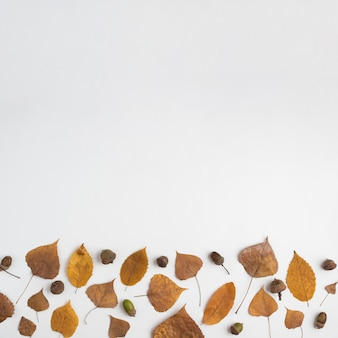 Autumn composition with acorns