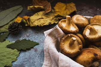 Autumn composition with boletus and withered green andyellow leaves