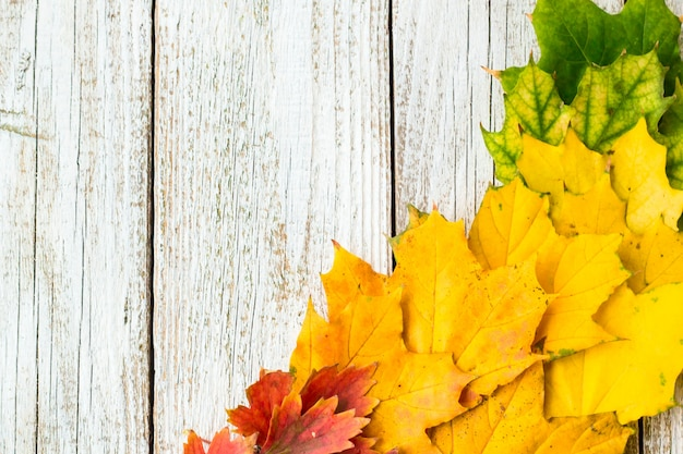 Autumn composition with colorful leaves of different trees in a corner of the frame on a white wooden background