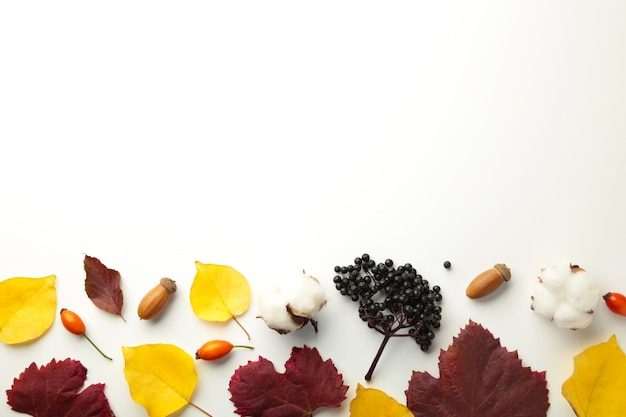Autumn composition with dried flower and leaves on grey background. top view