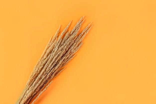 オレンジ色の背景に乾燥したパンパスグラスの葦と秋の構成。最小限のスタイリッシュでクリエイティブなフラットレイ、テキスト用のコピースペース。