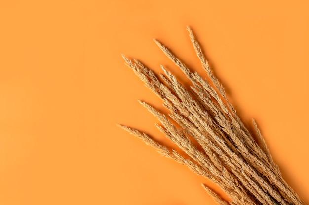 オレンジ色の背景に乾燥したパンパスグラスの葦と秋の構成。最小限のスタイリッシュでクリエイティブなフラットレイ、テキスト用のコピースペース