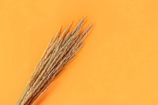 Autumn composition with dry pampas grass reeds on orange background. minimal, stylish, creative flat lay, copy space for text.