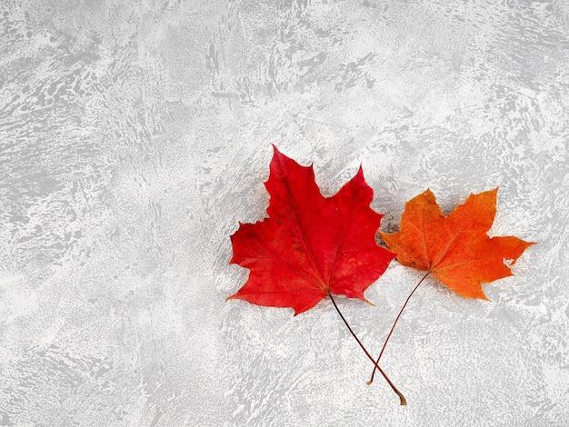 白いコンクリートの背景の葉と秋の構成。