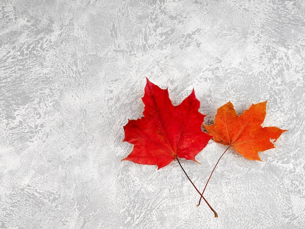 Autumn composition with leaves on white concrete background.