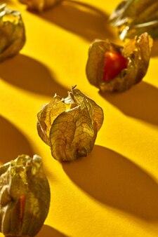 熟した黄色いサイサリス植物と秋の構成