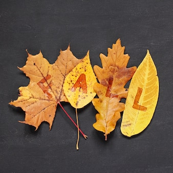 Autumn concept. fallen yellow leaves from maple, poplar, oak and willow trees with inscription fall on blackboard.