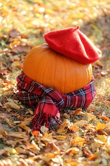 Autumn concept. halloween. decoration from a pumpkin in a beret and a checkered scarf.