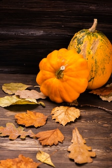 Autumn concept: orange pumpkins with dry leaves