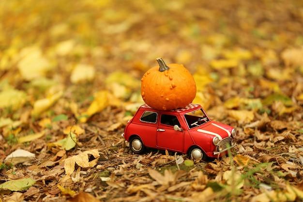 Autumn concept.pumpkin delivery. fall season.