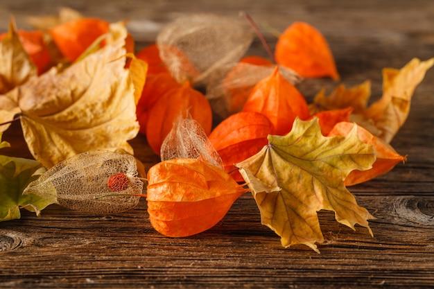 秋の静物と秋のコンセプト-秋の紅葉と明るい日光の中で古い本。乾燥した秋の紅葉と古い本の秋のレトロな静物