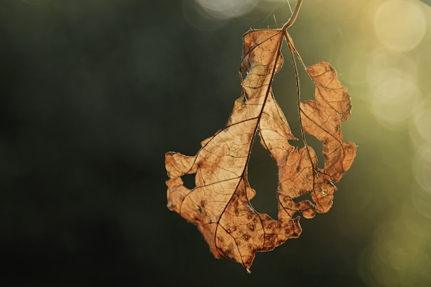 Autumn concept. yellow alone leaf dying