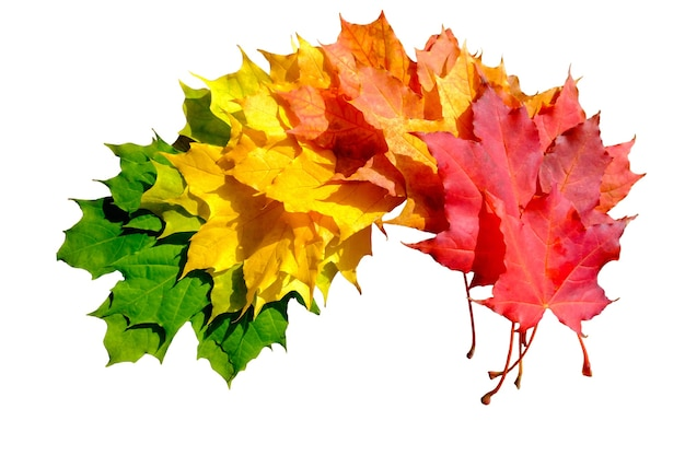 Autumn creative composition. colorful leaves on white background. fall leaves. autumn background. flat lay, top view.
