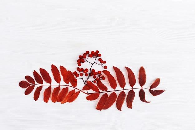 가을 창조적 인 구성. 마가 목과 흰색 나무 표면에 열매의 말린 된 잎. 가을 개념. 가 배경입니다. 평평한 바닥, 평면도, 복사 공간