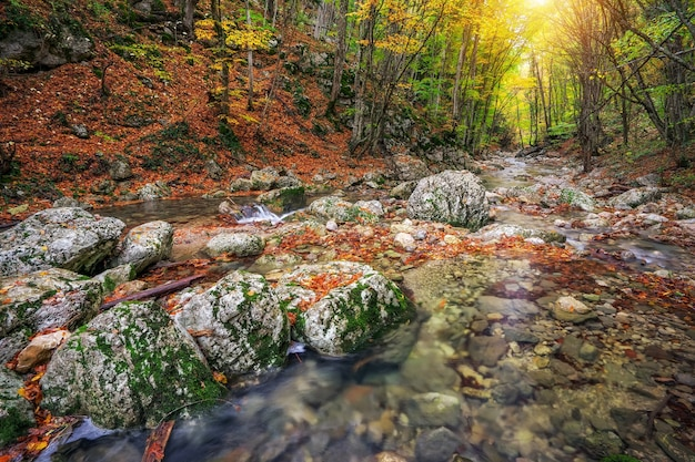 森の山の黄色の木の葉と岩と秋の小川の森。