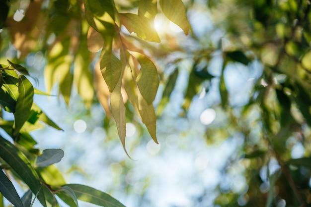 노란색과 녹색의 단풍 사이로 햇살이 반짝이는 가을날