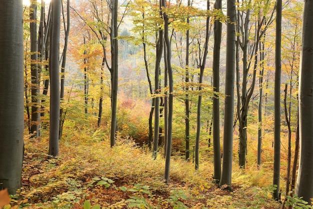 日没時の山の斜面にある秋の落葉樹林