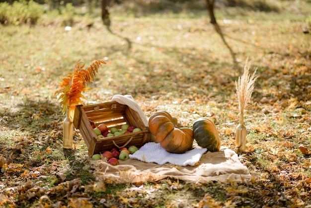 Autumn decor in the park. pumpkins and red apples lying in wooden box on autumn . autumn time. thanksgiving day.