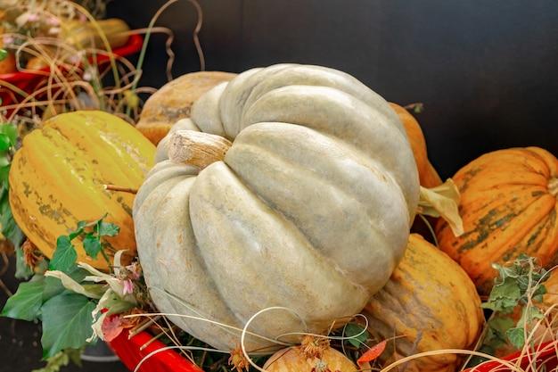 秋の装飾、大きなカボチャとカボチャのさまざまな形とサイズ。食物。