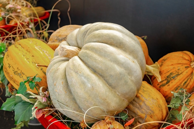 Autumn decorations, big pumpkin and pumpkins various shapes and sizes. food.