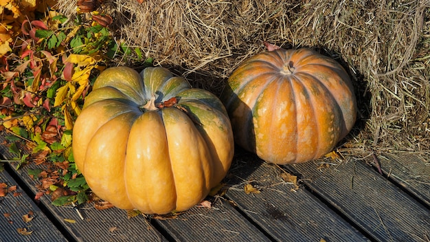 Autumn decorative pumpkins on straw with leaves. thanksgiving harvest festival concept.