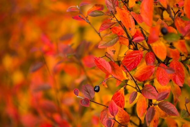 Осенний дизайн цветочный фон с листьями