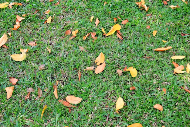 Autumn dried leaves fall on green grass field. view from above.