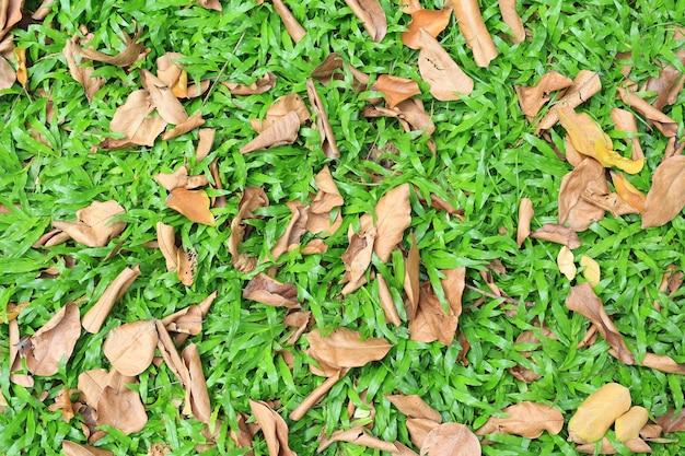 Осень высушенные листья падают на поле зеленой травы. выше зрения.