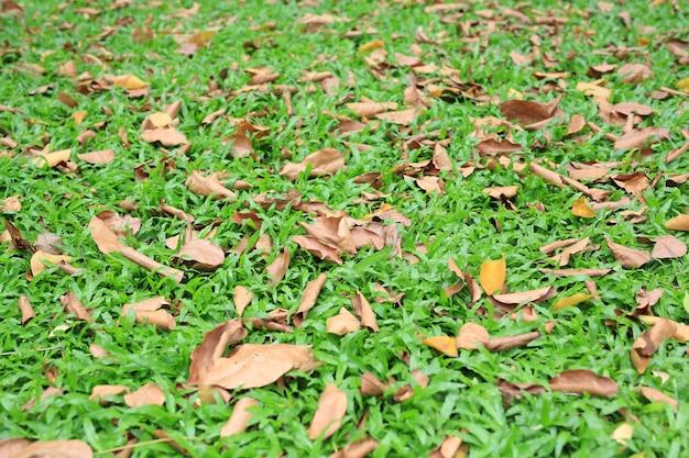 Осенние сухие листья падают на поле зеленой травы.
