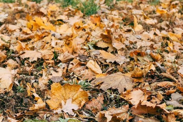 Осенние сухие листья на траве