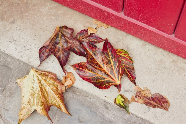 Autumn dry leaves on the street