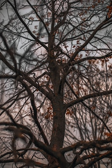 夕方の空を背景に秋の乾いた木の枝