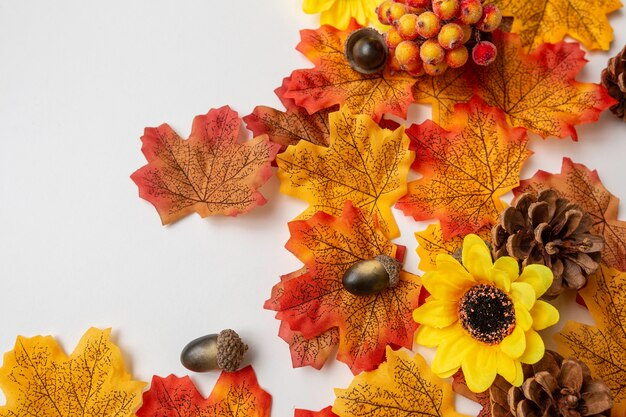 白い背景の上の秋の要素