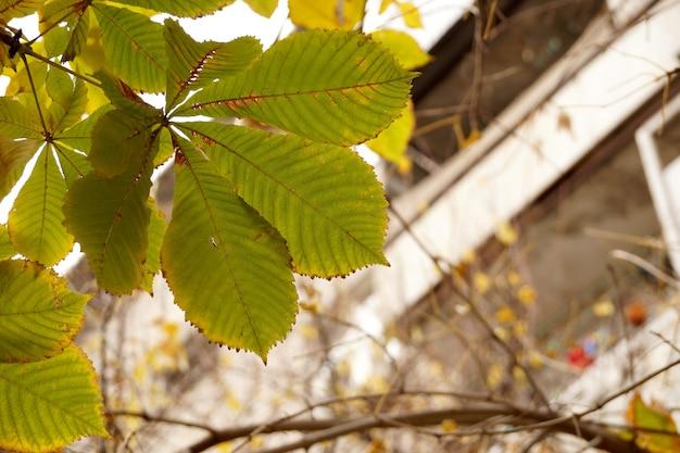 밤나무 잎이 있는 가을 에뛰드