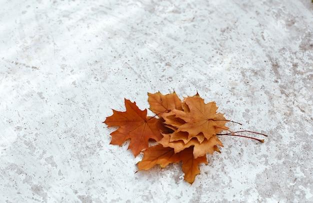 ラフなテクスチャの明るい灰色の背景、テキストの場所でオレンジ色のカエデの葉の秋の秋の花束