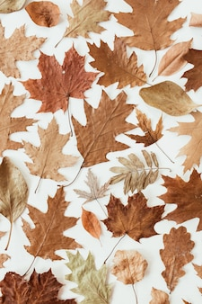 Autumn, fall composition. beautiful of brown, orange, beige dried leaves