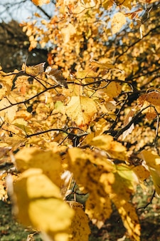 Autumn and fall composition. beautiful landscape with yellow leaves