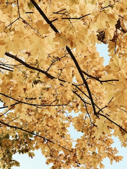 Autumn and fall composition. beautiful landscape with yellow maple leaves. fall concept. natural.