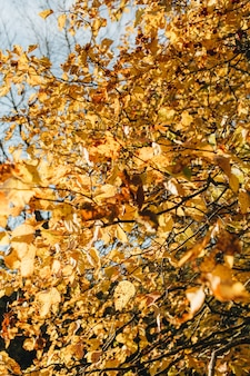 Autumn and fall composition. beautiful landscape with yellow and orange leaves at sunny day