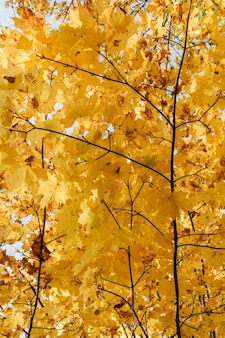 Autumn and fall composition. beautiful landscape with yellow and orange maple leaves and trees