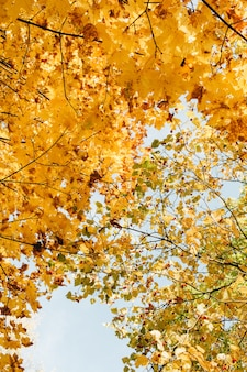 Autumn and fall composition. beautiful landscape with yellow and orange maple leaves