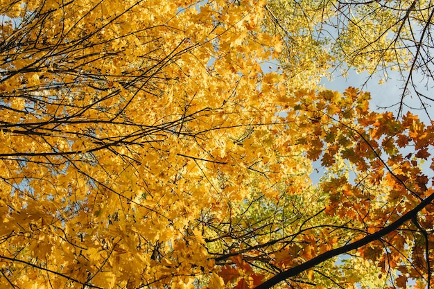 Autumn and fall composition. beautiful landscape with yellow and orange maple, oak leaves