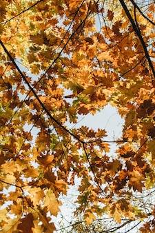 Autumn and fall composition. beautiful landscape with yellow and orange oak leaves