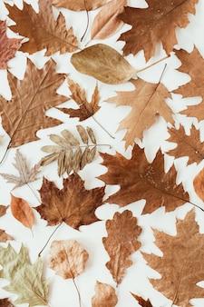 Осень, осенняя композиция. красивые коричневые, оранжевые, бежевые сушеные листья