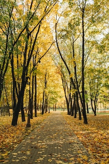 Autumn and fall composition. beautiful solitary walkway in the park with dried leaves