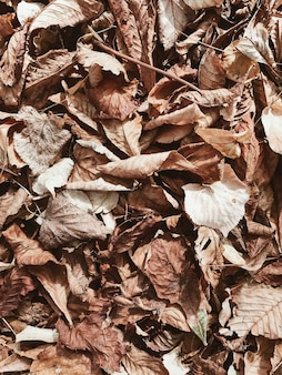 Autumn and fall composition. beige and brown dried leaves