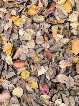 Autumn and fall composition. colorful yellow grey leaves