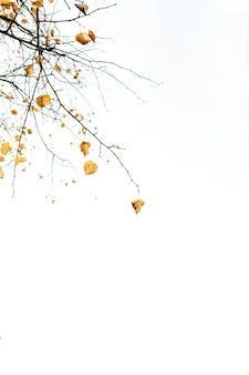 Autumn and fall composition. dried branch with yellow leaves against white sky