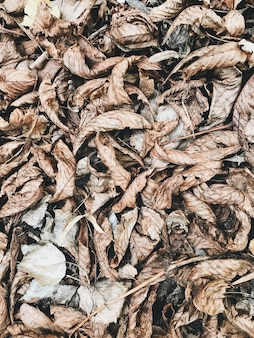 Autumn and fall composition. dried brown leaves