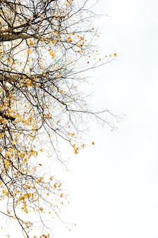 Autumn and fall composition. trees with dried branches and yellow leaves. fall concept. natural.